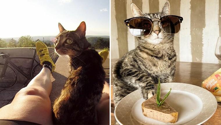 '어디까지 가봤오?' 고양이를 모시고 여행을 다니는 집사